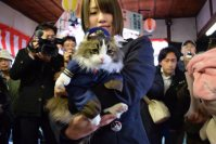 Love, the new stationmaster cat at Aizu Railway's Ashinomaki Onsen Station, is seen on Dec. 24, 2015, in Aizuwakamatsu, Fukushima Prefecture. (Mainichi)