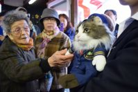 Local fans greet Love the new stationmaster cat at Aizu Railway's Ashinomaki Onsen Station, on Dec. 24, 2015, in Aizuwakamatsu, Fukushima Prefecture. (Mainichi)