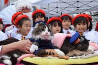 New feline stationmaster Love, left, and outgoing stationmaster Bus are seen at Aizu Railway's Ashinomaki Onsen Station on Dec. 24, 2015. (Mainichi)
