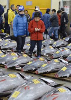 移転のため最後となった築地市場での初競りで生鮮マグロの値踏みをする仲卸業者たち=東京都中央区で2016年1月5日午前4時33分、猪飼健史撮影