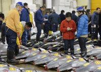 移転のため最後となった築地市場での初競りで生鮮マグロの値踏みをする仲卸業者たち=東京都中央区で2016年1月5日午前4時32分、猪飼健史撮影