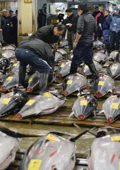 移転のため最後となった築地市場での初競りで生鮮マグロの値踏みをする仲卸業者たち=東京都中央区で2016年1月5日午前4時27分、猪飼健史撮影