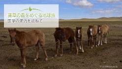 人が母馬から搾乳しているあいだ、ロープにつながれてミルクを欲しそうにしている子馬たち