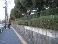 目白通りを進む=銅崎順子撮影