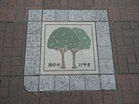 府中市の木はケヤキ=銅崎順子撮影