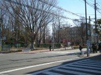 前の写真の木が見えてきた。右奥がもう東京外国語大=銅崎順子撮影