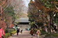 東京都美術館の手前の道からは旧因州池田屋敷表門(黒門)が見える=江刺弘子撮影