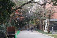 趣のある並木道を進む=江刺弘子撮影