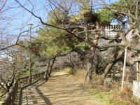 ソフィア通りの反対側の土手は散歩コース。春には桜が満開に=柴沼均撮影