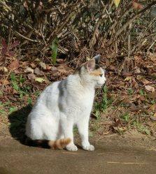 土手でひなたぼっこをしていたネコ。都心と思えないのんびり感が漂う=柴沼均撮影