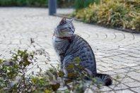 路地にある小さな公園で出会った猫=千貫朋子撮影