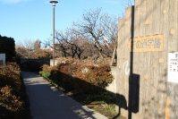 通りから北向きに伸びる「花の通学路」は都立武蔵高校へ続く=佐伯信二撮影