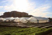 左手に畑とその先にそびえ建つマンションが見えてきたら大学はもうすぐ=佐伯信二撮影