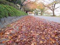 大学周辺は多摩丘陵の緑がたくさん。キャンパスの通路は落ち葉が積もる=仲村隆撮影