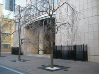 共立女子学園と書かれた建物。大学はこの建物がメーン。春はシダレザクラが美しい=銅崎順子撮影
