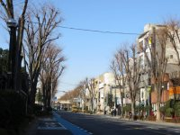 国道17号を渡り、国道463号になる。きれいなケヤキ並木が始まる。初夏は本当に美しい=浜田和子撮影