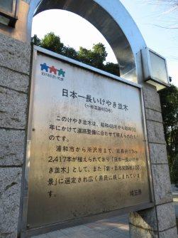 国道463号には「埼玉県の木」のケヤキ並木が続く。ケヤキは所沢市まで約17キロにわたり計2417本植えられ、「日本一長いけやき並木」として親しまれている。ちなみにケヤキは「さいたま市の木」でもある=浜田和子撮影