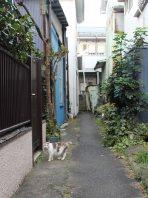 路地裏にすむ地域猫。この1匹しか姿が見られなくなったという=横浜市中区小港町3で