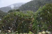 気温が下がり、雪が吹き付けた奄美大島・湯湾岳(ゆわんだけ)9合目付近鹿児島県大和村で2016年1月24日午後1時36分、神田和明撮影