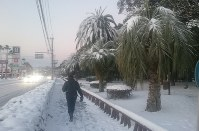 A person heads for work early in the morning in the city of Kagoshima on Jan. 25, 2016, as trees on even this southerly island are covered with snow. (Mainichi)