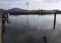 気仙川河口のマリーナ跡で、水中カメラで撮影しながら底の汚泥の表面を捜索する潜水士(手前)。中央奥は「奇跡の一本松」=陸前高田市気仙町で