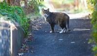 静まりかえった団地の敷地内を歩く野良ネコ=2016年1月27日、内藤絵美撮影