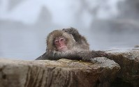 A Japanese monkey warms up in a hot spring at the Jigokudani Yaen-koen wild monkey park in Yamanouchi, Nagano Prefecture. (Mainichi)