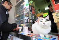 Hachi, the shopkeeper cat, is seen at the Itokyu tobacco shop in Mito, on Feb. 1, 2016. She