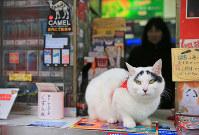 東日本大震災の1ケ月後に生まれ、水戸駅前で「幸せ」を振りまいてきた「招き猫」のハチ。眉毛が八の字の事から名前がついた=水戸市で、梅村直承撮影
