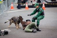 今年1月17日にはフィニッシュ地点で不審者を警察犬が捕まえるなどの訓練が行われた=東京マラソン財団提供