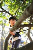 津波で母方の祖父母を失った斎藤佑星君(9)。父方の祖父母も自宅の2階まで波が来て波に流されたが無事だった。その庭の津波に流されなかった木に登る。津波が色濃い痕跡を残す日常で育ってきた=宮城県石巻市で2015年11月1日、梅村直承撮影