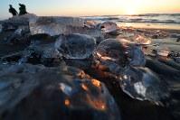 海岸に打ち上げられ、朝日を浴びて輝くジュエリーアイス=北海道豊頃町の十勝川河口近くで、手塚耕一郎撮影