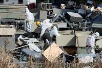 廃棄物置き場で作業する労働者ら=福島第1原発で2016年2月23日、森田剛史撮影