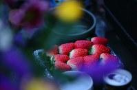 12月の月命日。夜明け前、佐藤信行さん(65)が供えた真っ赤なイチゴ=宮城県気仙沼市で2015年12月11日、小川昌宏撮影