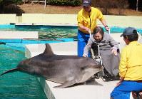 車椅子のままイルカに触れる南紀園のお年寄り=和歌山県太地町立くじらの博物館で、藤原弘撮影