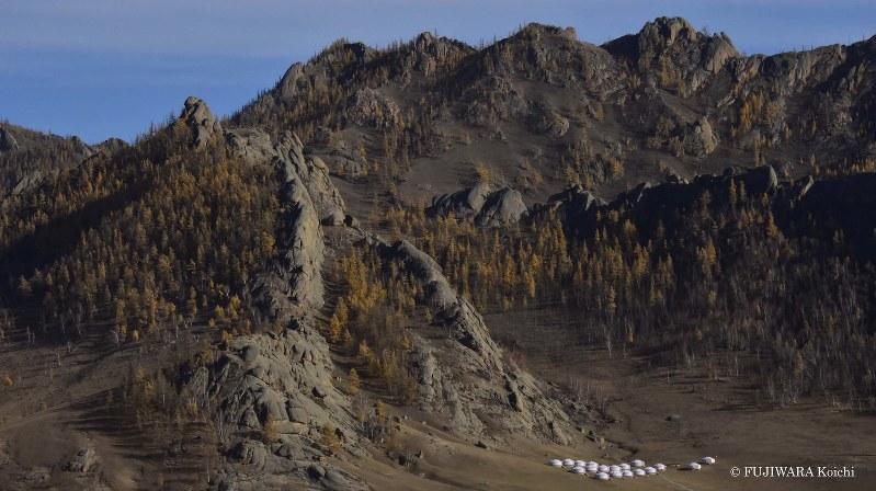 乾燥した山の斜面に、黄金色に輝くシベリアカラマツの森が続き、ふもとには白い伝統家屋ゲルが点在している。シベリアカラマツは現地では「ナス」と呼ばれ、よくしなうその幹は耐久性に優れるため、ゲルの骨組みに使われている