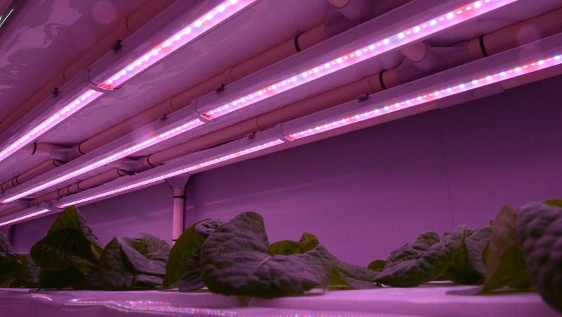 LEDの光で育つ野菜