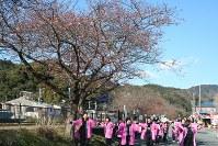 河津桜まつりの開幕を迎え踊りを披露する河津町商工会女性部員ら=静岡県河津町で2016年2月10日