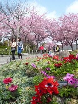 春の彩りの中、河津桜のトンネルを散策する女性たち=三重県桑名市長島町で2016年3月8日、佐野裕撮影
