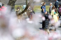 People enjoy watching and taking photos of budding cherry blossoms along Inui Street in the Imperial Palace on March 25, 2016. (Mainichi)