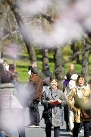 People admire budding cherry blossoms on Inui Street in the Imperial Palace on March 25, 2016. (Mainichi)