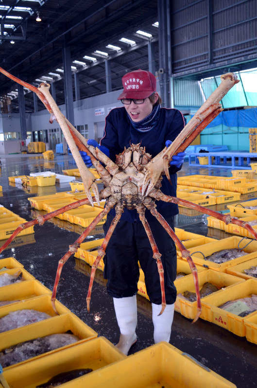 Spider Crab Size Photo Journal: ...