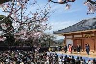 桜の満開が近い道成寺で「安珍念仏踊り」を披露する福島県の中学生たち=和歌山県日高川町鐘巻で2016年3月26日