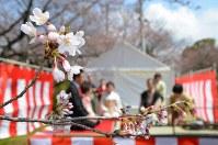 桜が咲く中、開かれた野だて=福岡県久留米市国分町の陸上自衛隊久留米駐屯地で2016年3月27日、林壮一郎撮影