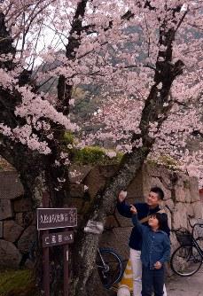 ソメイヨシノの写真を撮る親子=鳥取市で2016年3月31日、李英浩撮影