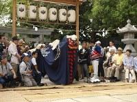 八幡神社の表鳥居から雌の獅子、雄の獅子の順に囃子の合図で進み、一斉に太鼓橋を渡って中鳥居をくぐり、舞の広場前に押し出る=松本成さん撮影