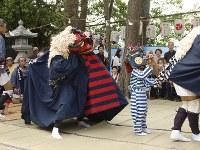 「出舞」。始まりの舞。横笛の囃子とともに獅子が舞の広場に躍り出る。場の四隅を清めながら舞う=松本成さん撮影