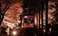 運行が始まった嵐電の夜桜電車=京都市右京区で2016年4月1日、小松雄介撮影