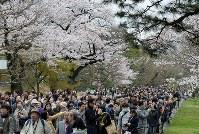 桜が見ごろを迎え、大勢の人が訪れた皇居・乾通り=東京都千代田区で2016年4月2日、徳野仁子撮影