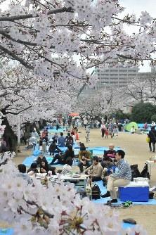 大勢の花見客でにぎわう大分城址公園=大分市で2016年4月2日、西嶋正法撮影